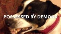 Demonic possession of Jack Russell - 720p HD