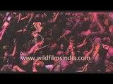 Holi - Festival celebrating the love between Krishna and Radha