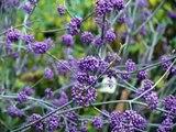 la beauté de la nature fleurs