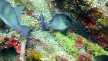 Scuba Diving Florida's Gulf of Mexico - Clearwater Florida