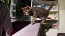 Cat jumping in slow motion - GoPro Hero 3 Silver
