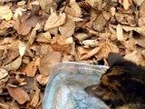 Fisher cat kitty   cat vs fish 0:1 Funny videos cat and fish [cat vs fish]