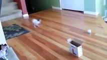 Cat Jump Fails Top 10 - Hilarious Funny Cats & Cute Kittens