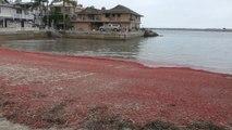 Marée rouge sur une plage de Californie