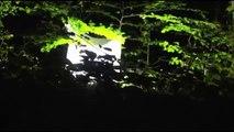 Les chauves-souris sous le projecteur - Nuit des Chauves-Souris 2014