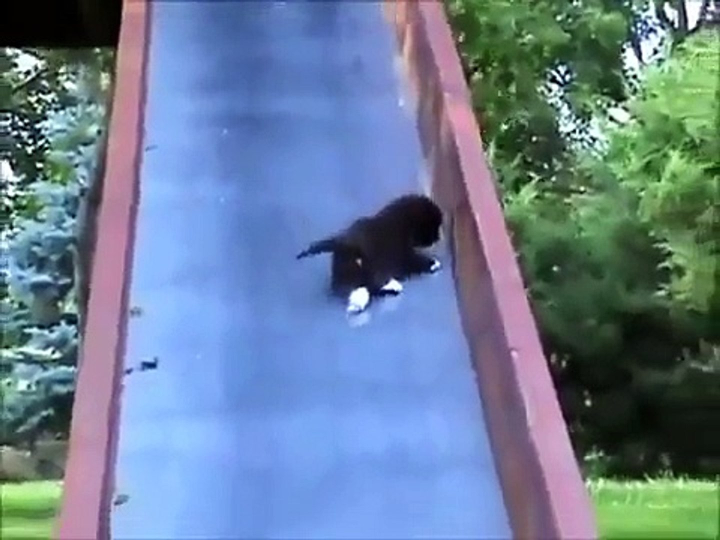 Best funny and cute videos
