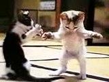 funny cat dancing! LoL Hahaha