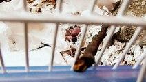 Cucciolo criceto Roborosky APPENA NATO! ❀