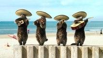 Bel été sur France 3 avec Les Marmottes Mariachi
