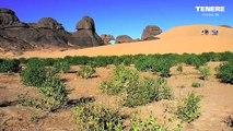 ALGERIA-ALGERIEN-ALGERIE-SAHARA-الجزائر. (Hoggar, Tassili des Ajjers...)