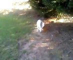 CUTE KITTY CAT CHLOE' PLAYTIME WITH SEBASTIAN- KISSING KITTIES- AWWWW!!!!
