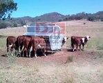 Linn Post & Pipe - EZMT Portable Cattle Feeder - video