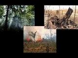 Gestão Ambiental - Vídeo Temático da Profissão