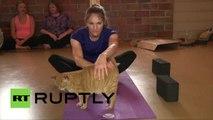 «Chat tête en bas» ou le cours de yoga assisté par les chats