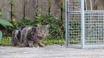 Lonely Miaow: Trapping Feral Cats