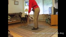 How to Teach Your Dog to Skip Rope -Dogs Jumping Rope