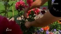 Environnement : Une 4e fleur pour la Roche-sur-Yon ?