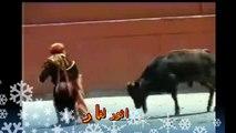 تزاوج الثيران  مع النساء من مسابقه الثيران