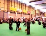 Places selection Junior class Crufts 2007