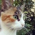 #cat #cats #TagsForLikes #catsagram #catstagram #instagood #kitten #kitty #kittens #pet #pets #ani