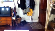 FUNNY VIDEOS  Funny Cats   Funny Cat Videos   Funny Animals   Fail Compilation   Cats Fails #2