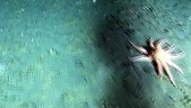 THE BERING SEA SUBMARINE ADVENTURES - Deep sea corals