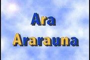5 Ara Ararauna ( Blue and yellow Macaw o Guacamayo azul y amarillo)