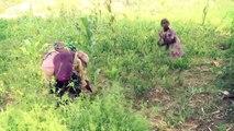 Améliorer la sécurité alimentaire en Éthiopie