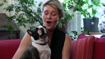 Singing Boston Terrier, Cute Funny Little Dog Louie - What a Voice, What a talent