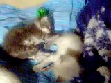 More video of my kitten(its not funny just me talking away)