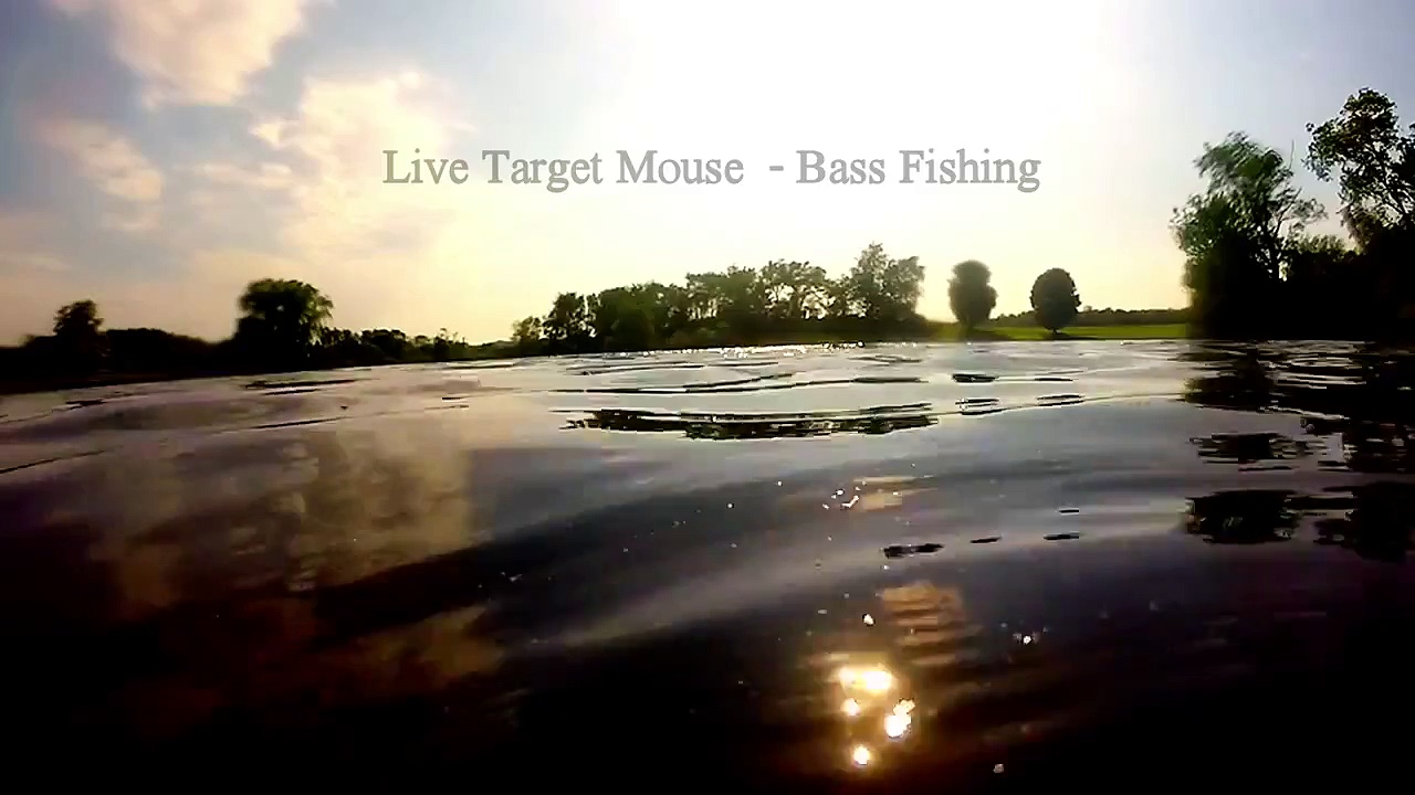 LiveTarget Field mouse – Bass Fishing