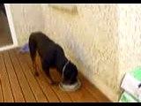 keyser the rottweiler