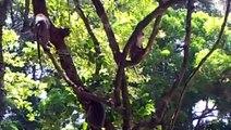 Monkey-Monkey in Angkor Tom-Funny MonKey-Monkey video-Little monkey.