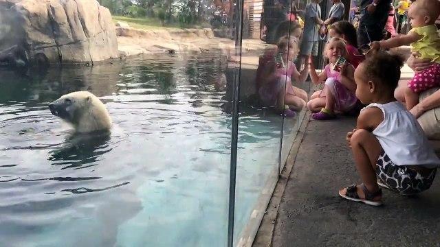 Polar Bear: A Children's Story - Adventure's of Riley Madison