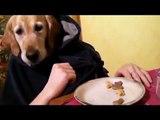 Un incroyable chien humain qui mange, boit son café et fume sa clope