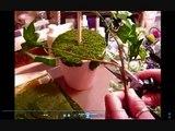 """""""Victorian Garden Topiary"""" tutorial pt 2 of 2 (Vid# 329)"""