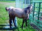 Call 815-600-6464 / Animal Rental Chicago, Farm Zoo Rental Chicago, Petting Zoo Rental Chicago Area