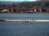 Surfing the River Severn Bore