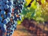 Lamborn Family Vineyards 2005 Cabernet Sauvignon Tasting