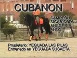 CUBANON, VIDEOS DE CABALLOS, CABALLOS PURA RAZA ESPAÑOLA