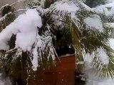 Nevicata 16 Dicembre a Villanova