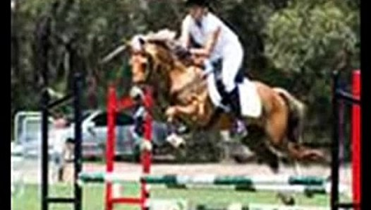 X x horse cruelty X x - video dailymotion
