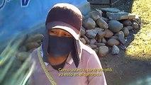 Jornaleros sufren explotación laboral en Baja California | Noticias de  Baja California