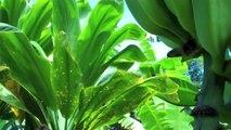 Flowers, Plants, & Fruit on Maui - Hawaii