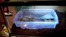 Reptile Room 2011 TOUR: Downsized & Re-Arranged