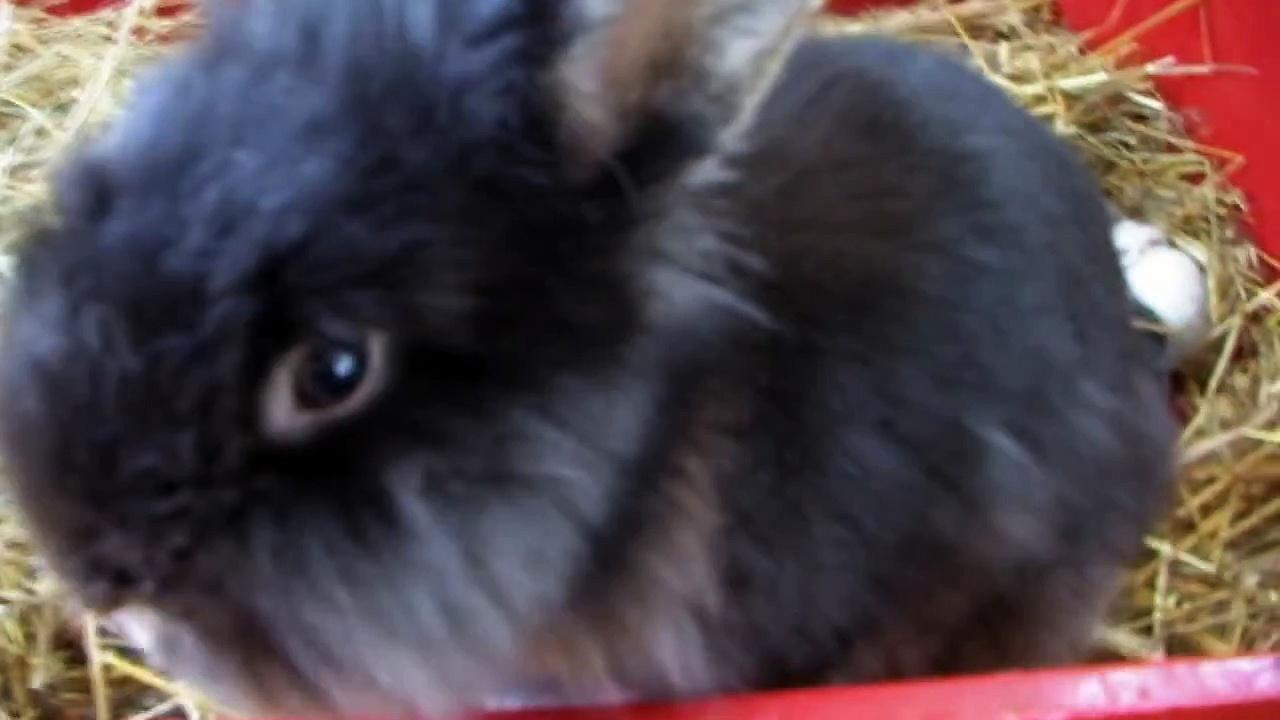 Little rabbits