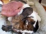Mog Troll Holland Lop Bunny Rabbit Sleep Clips