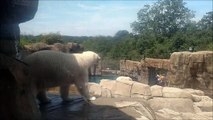 Rapping Polar Bear   Pittsburgh Zoo   Busta Rhymes   Break Your Neck (Clean Version)