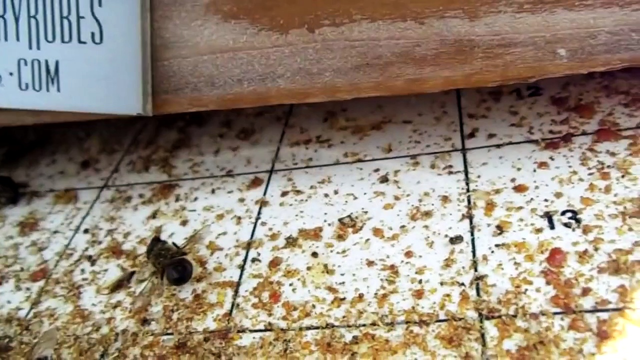 Urban Beekeeping: # 27 Varroa mite screened bottom board explanation, how to do quadrant counts
