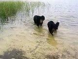 Honden lekker zwemmen